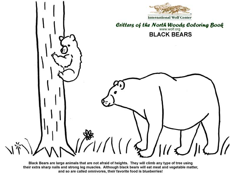 coloring book cover black bears - Wolf Coloring Book