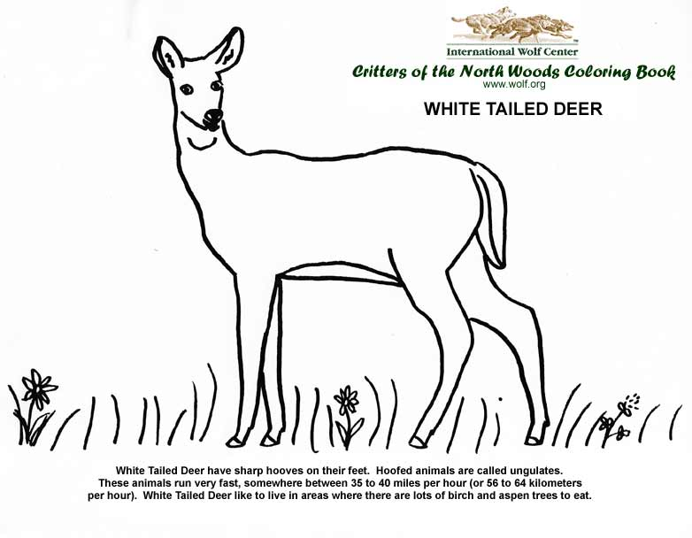 coloring book - Wolf Coloring Book
