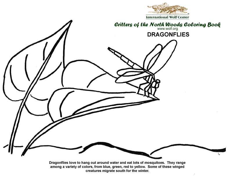 dragonflies - Wolf Coloring Book