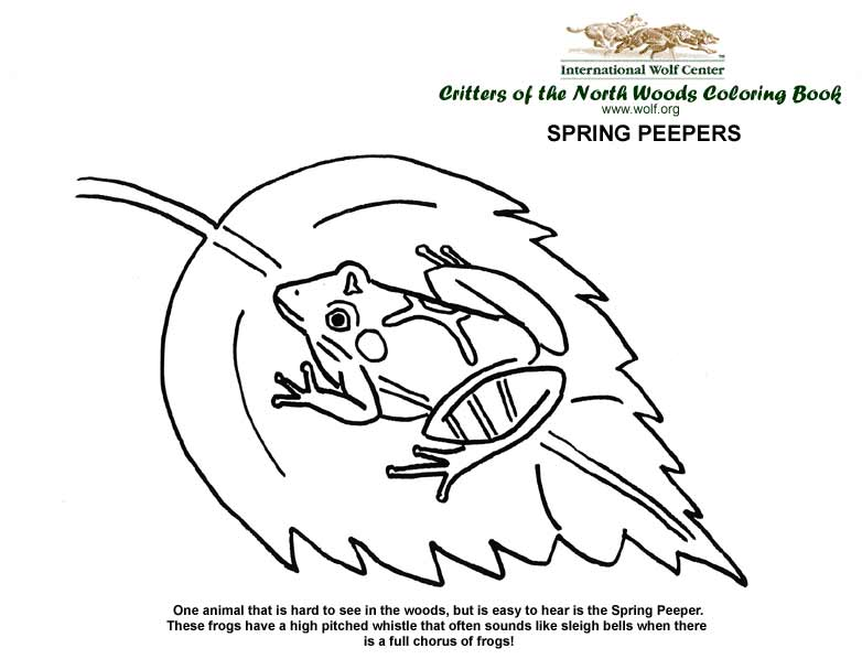 Coloring Book International Wolf Center