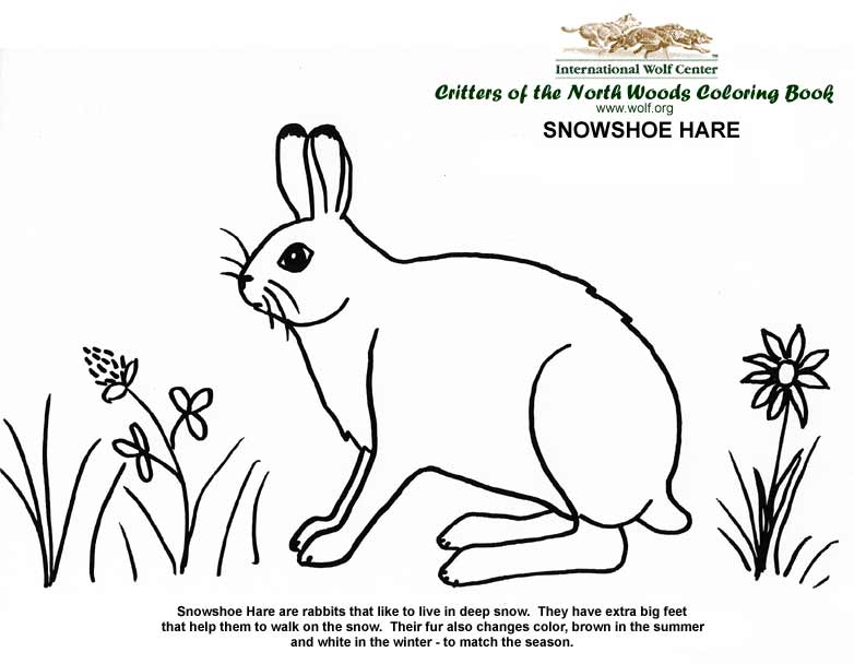 bear and hare coloring pages - photo#9
