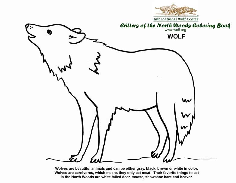 Coloring Book | International Wolf Center