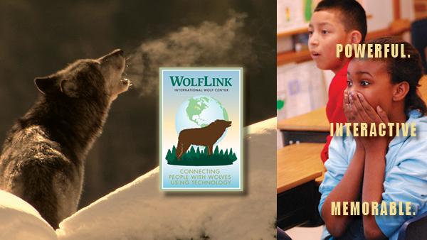 WolfLink interactive