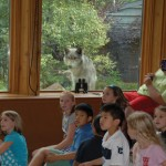 Junior Wolf Biologist Mini Camp - August 2020