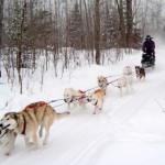 dogsled adult