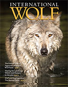 International Wolf Summer 2018