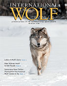 International Wolf Winter 2018